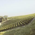 Vista sui vigneti-Alba-Azienda vitivinicola Ceretto-Alessandro Guida