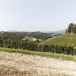Un percorso nei vigneti -Alba-Azienda vitivinicola Ceretto- Isabella Sassi Farìas