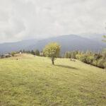 Il taglio del fieno-Ostana- Miridì- Alessandro Guida