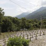 Vigna nuova Sampeyre -Borgata Roccia- Isabella Sassi Farìas