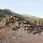 Catasta di legno. Méolans-Revel. Les Thuiles. Alessandro Guida