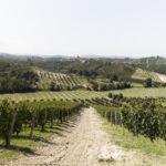 I vigneti -Alba-Azienda vitivinicola Ceretto- Isabella Sassi Farìas