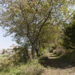 Il giardino e lo spazio immaginato-Ciglié-Isabella Sassi Farìas
