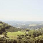 Vue du château de Cigliè sur les vignobles. Cigliè. Alessandro Guida