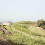 Vue sur les vignobles et une maison pour les residences d'artiste. Alba. Azienda vitivinicola Ceretto. Alessandro Guida