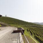 L'Acino. Alba. Azienda vitivinicola Ceretto. Isabella Sassi Farìas