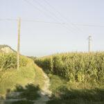 Vue sur les champs agricoles. Cigliè. Preose. Alessandro Guida