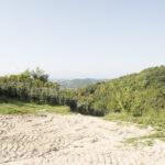 Le paysage des vignobles en direction de la rue principal. Cigliè. Davide Curatola Soprana