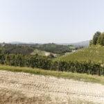 Un chemin dans les vignobles. Azienda vitivinicola Ceretto. Isabella Sassi Farìas