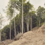 Ouverture de une route forestière tout près de Borgata Paraluop. Rittana. Borgata Paraluop. Alessandro Guida