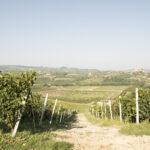 Paysage des Langhe. Alba. Azienda vitivinicola Ceretto. Davide Curatola Soprana